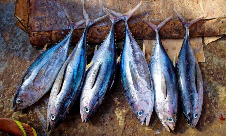 quale pesce mangiare