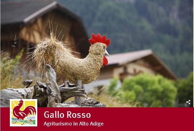 Gallo Rosso