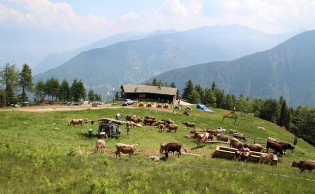 Alpeggi Lombardia