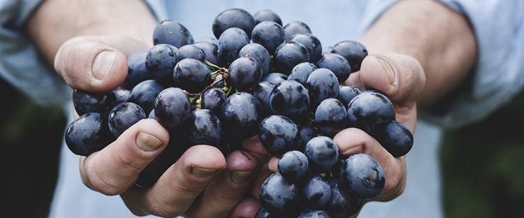 mercati agricoli milano settembre
