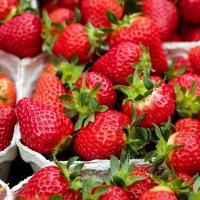Tutti i mercati contadini di Milano in programma nel 2019: date, orari e indirizzi