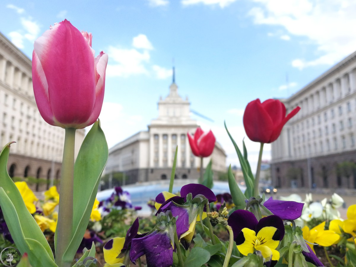 At home as a tourist ~ Top things to do for an unforgettable day in Sofia!