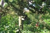 Le jardin des lianes - nichoir