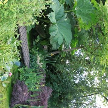 Le jardin des lianes - bassin