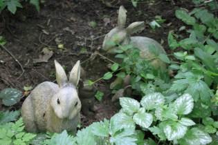 Le jardin des lianes - famille de lapins