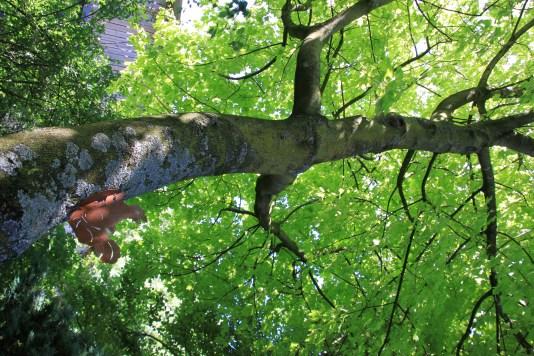 Le jardin des lianes - écureuil grimpant