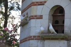 Le jardin des lianes - les 3 colombes