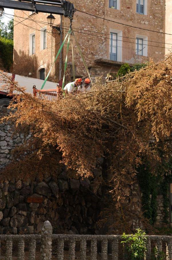 Talada Avet Pont Vell 003