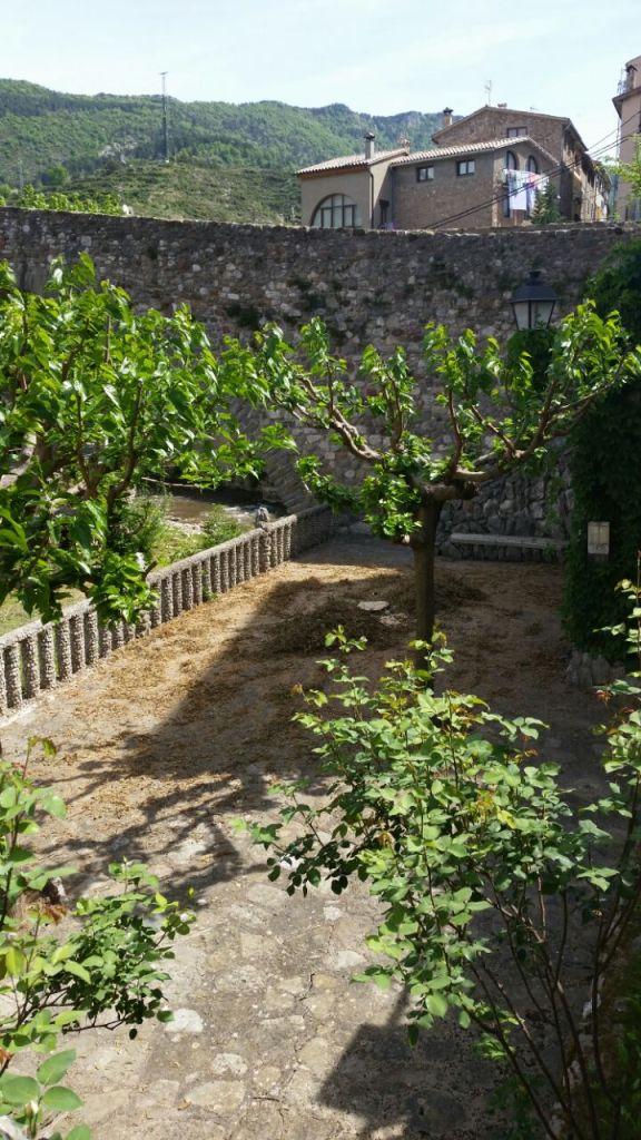 Talada Avet Pont Vell 005