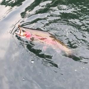 novice fishing