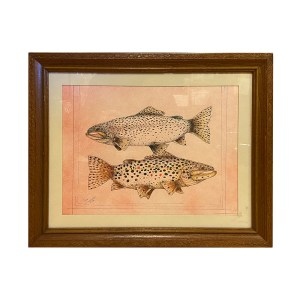 Jake Schneider – Rainbow and Brown Trout Drawing, Framed