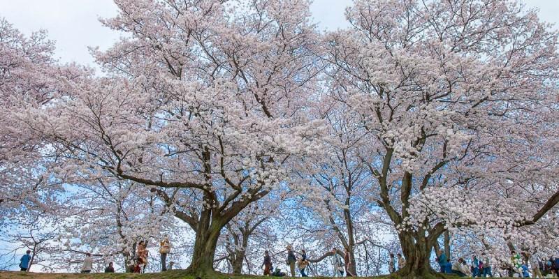 京都講座|吉光旅遊講座心得 傑利帶路帶你四季玩日本京都!