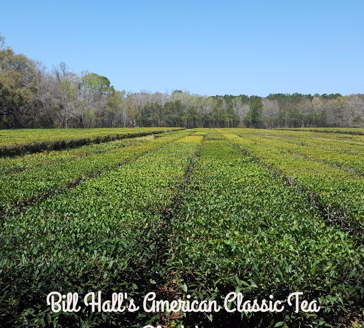 Bill Hall's American Classic Tea