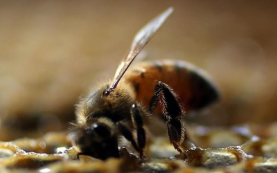 In Community with Bees, Trees, and Other Planet Life