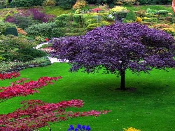 lillirose gardens