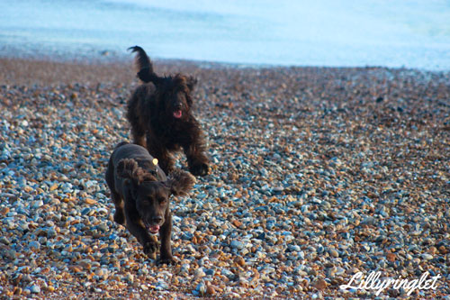 February photo challenge dogs leaping for ball on Brighton beach