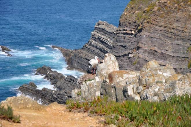 cerro da fontinha costa vicentina portogallo