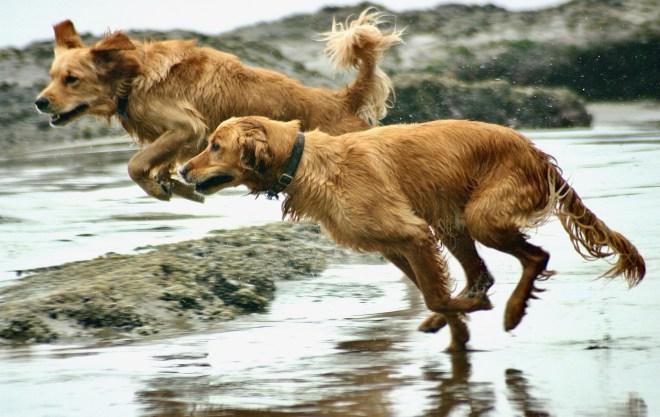 portogallo le spiagge che accettano i cani