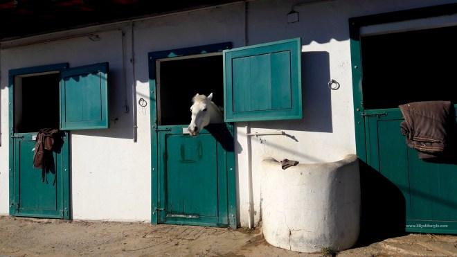 cavalli-lisbona