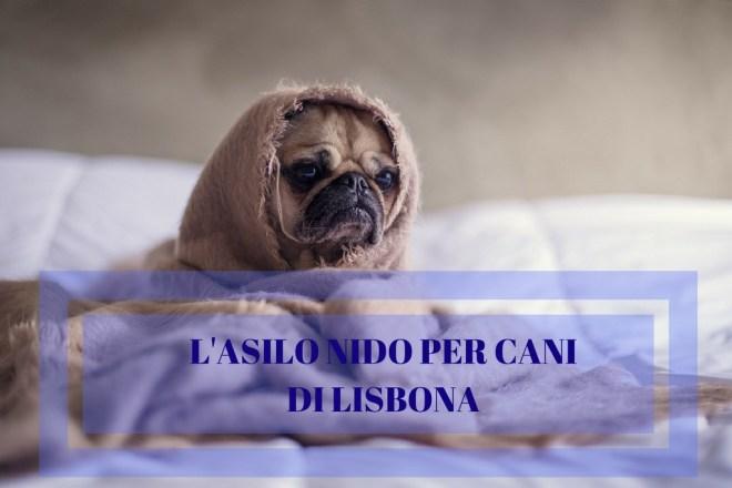 asilo nido cani lisbona