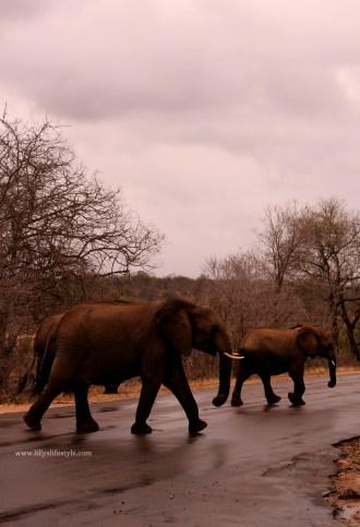 organizzare safari parco kruger