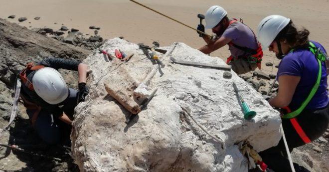 nido dinosauri carnivori portogallo