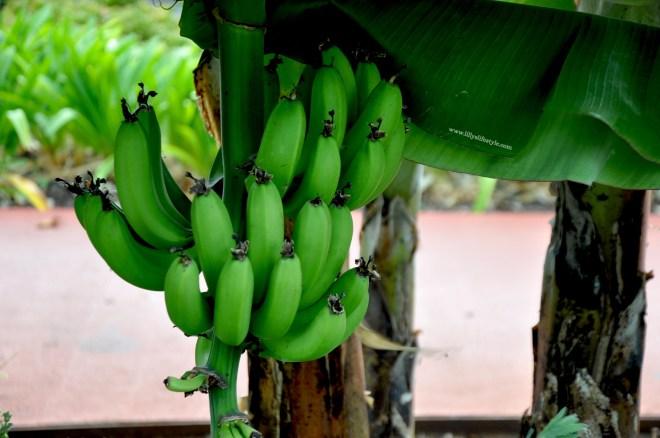 cosa mangiare a madeira la frutta