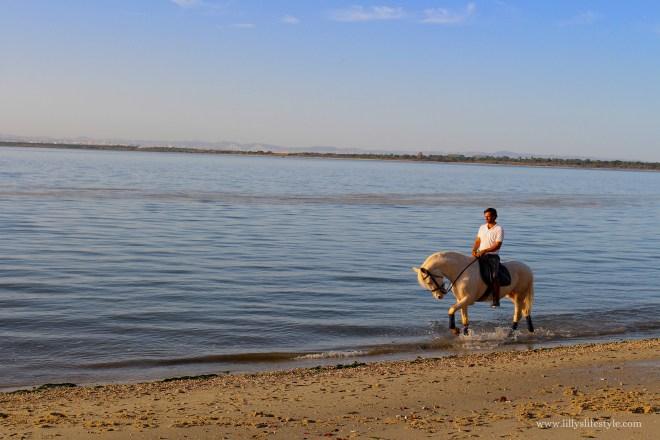 passeggiare in spiaggia a cavallo