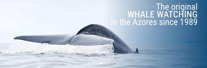 balene azzorre isola pico