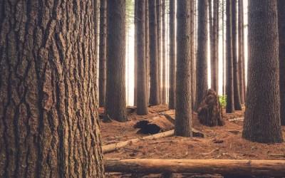 Le label FSC pour le bois, on vous dit tout