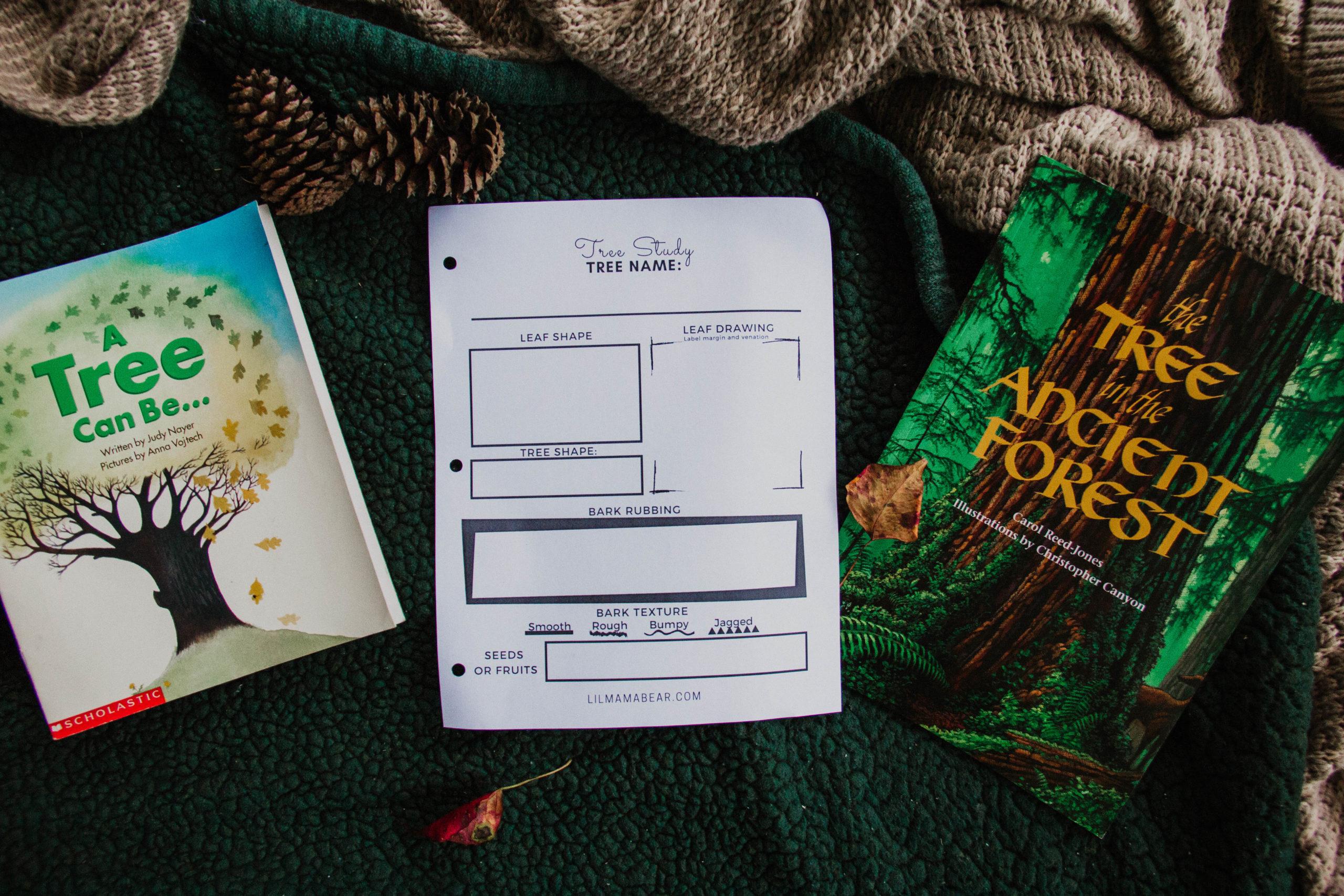 Tree Study Worksheet
