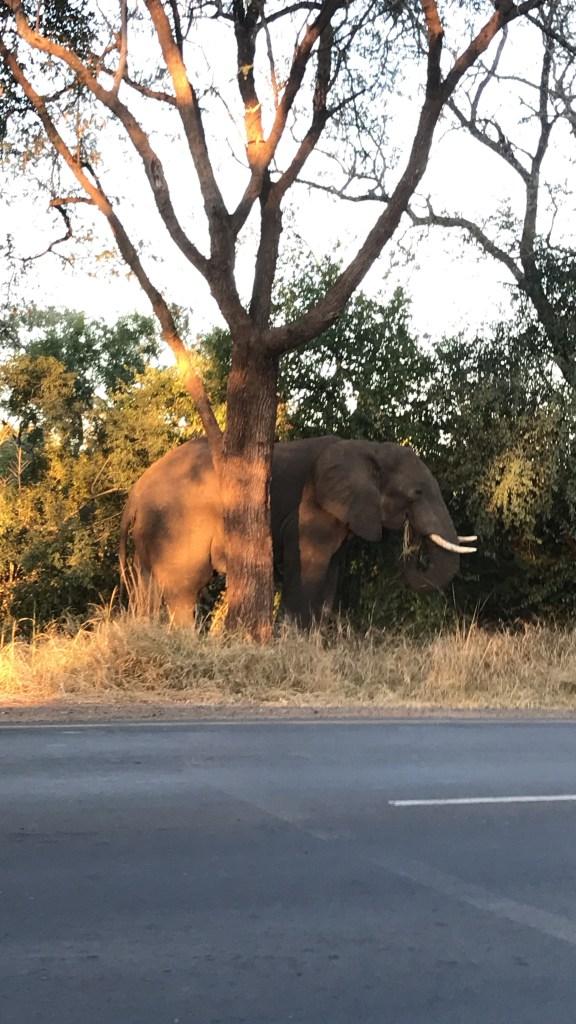 Lilmissbelle-Zimbabwe
