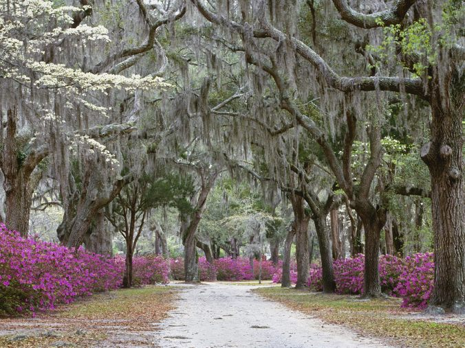 springtime-in-savannah-georgia