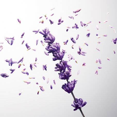 Carla Lavender