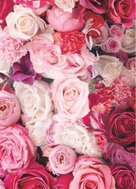 roses Landscape 2017