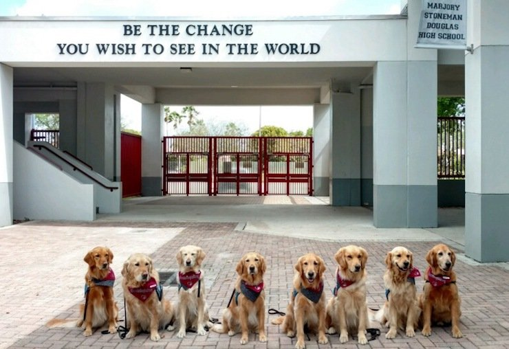 Comfort Dogs in Parkland