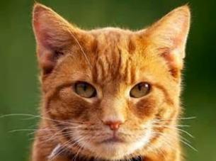 cat-copy