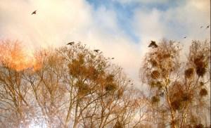 treetop-1351038_1920