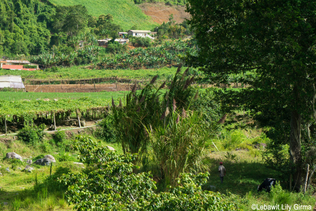 View of green fields in Manabao, Dominican Republic.
