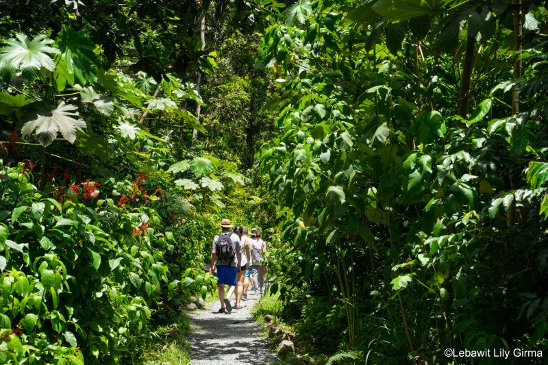 Tourists hiking El Yunque forest Puerto Rico 2019