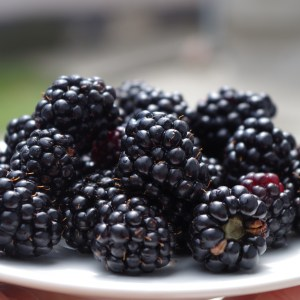 blackberries, on a plate, black