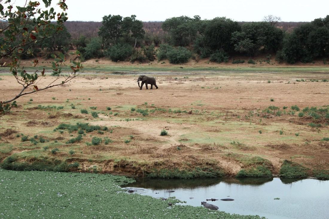 lilytoutsourire - safari au parc kruger - 3 jours dans le bush (5)