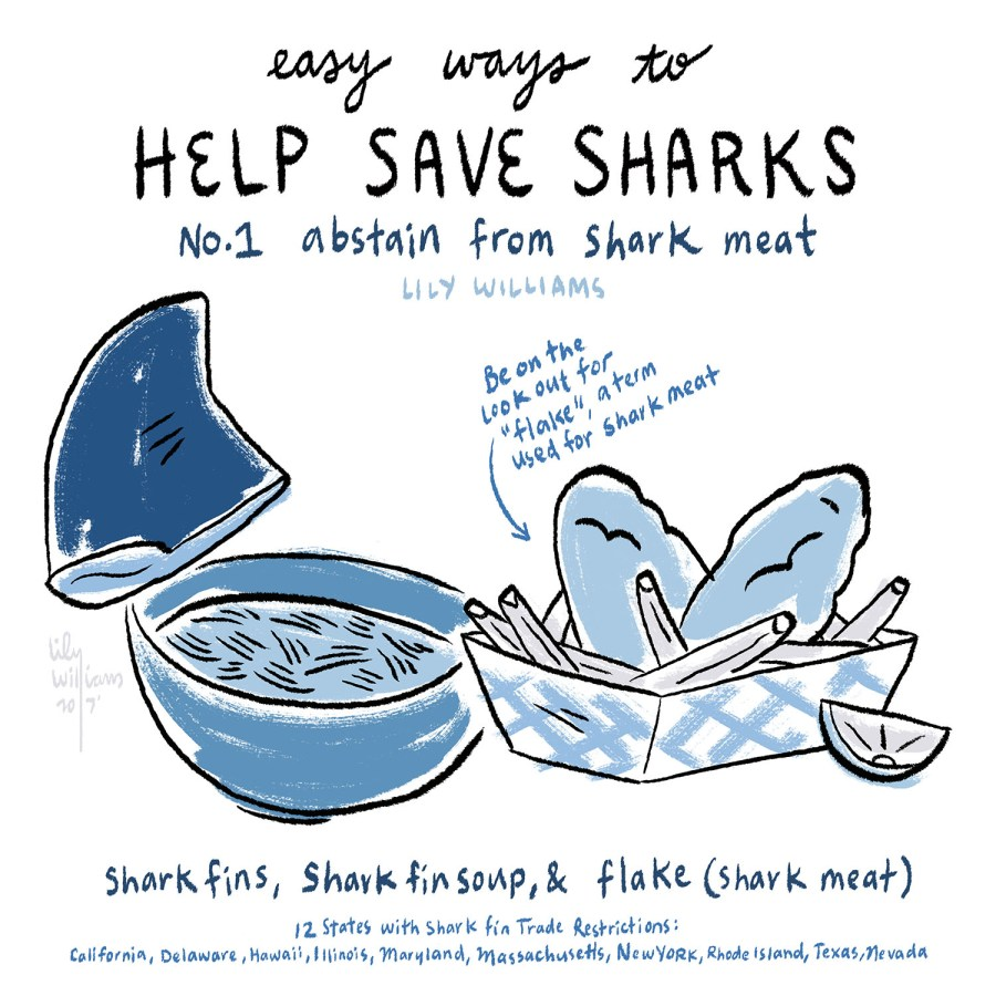 SharkWeek2017_5001