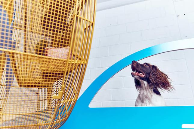 cachorros arte limaocravo mundo artistico