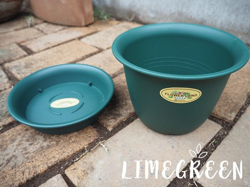 セリアの植木鉢