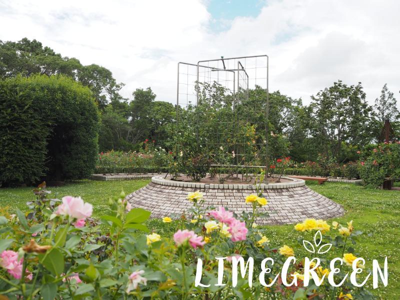 千葉市都市緑化植物園のバラ園