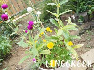 ダイソーの花の寄せ植え