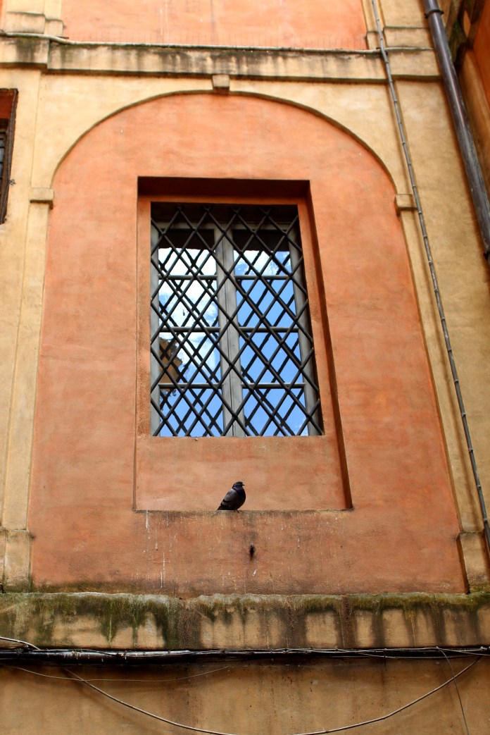 Cute windows in Siena.