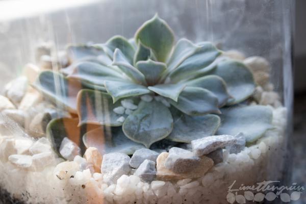 Sukkulenten richtig pflanzen