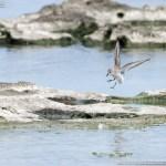 冬鳥と渡り鳥